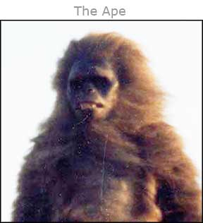 The_Ape