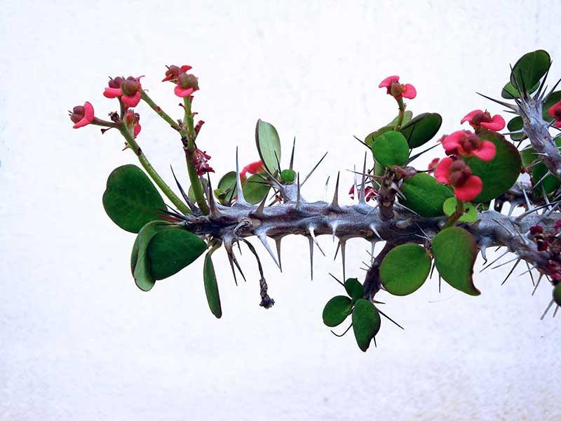 natural-Japanese-floral-arrangement
